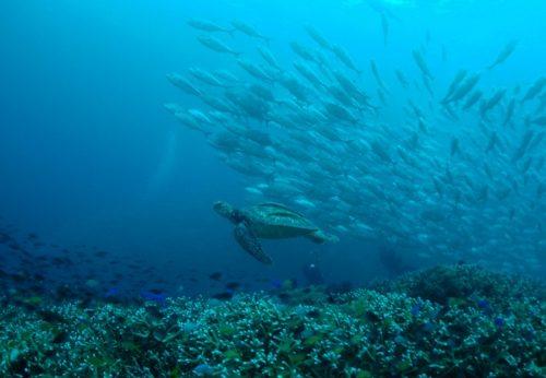 魚群に囲まれたい!!フィリピンボホール・バリカサグツアー11/22(水)~26(日)4泊5日