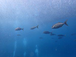 10/10 富戸海ログ 青い海を堪能しましょう♪