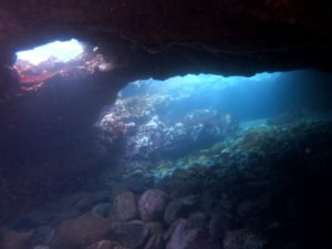 2/15 絶好調の青い海には夏から冬の魚まで