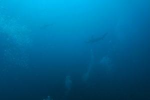 6/6 絶好調の神子元島です‼️この潮を逃さないでください^^v